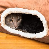 Easyology Interactive Cat Tunnel